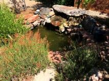 Front-yard-pond